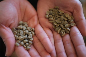 2種類の生豆