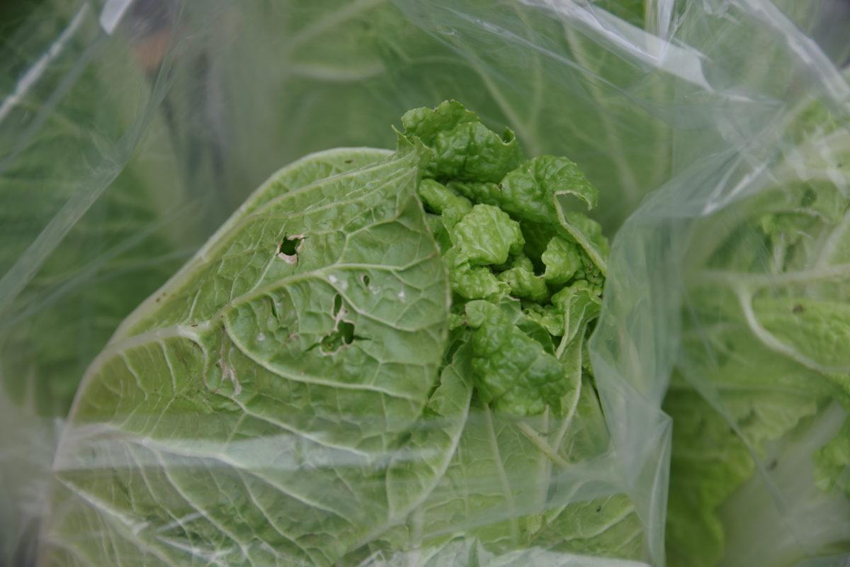 みち畑の虫食い野菜