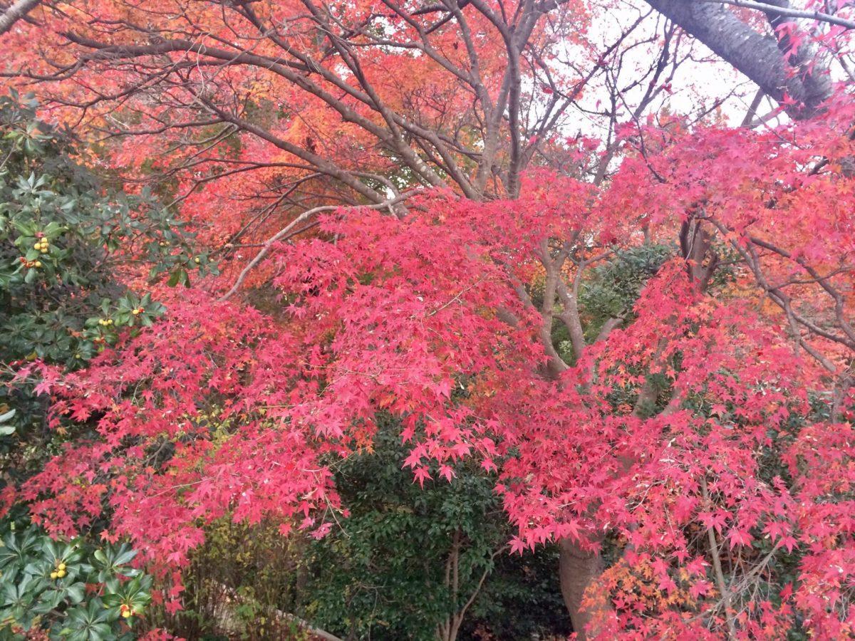 白野江植物公園植物01