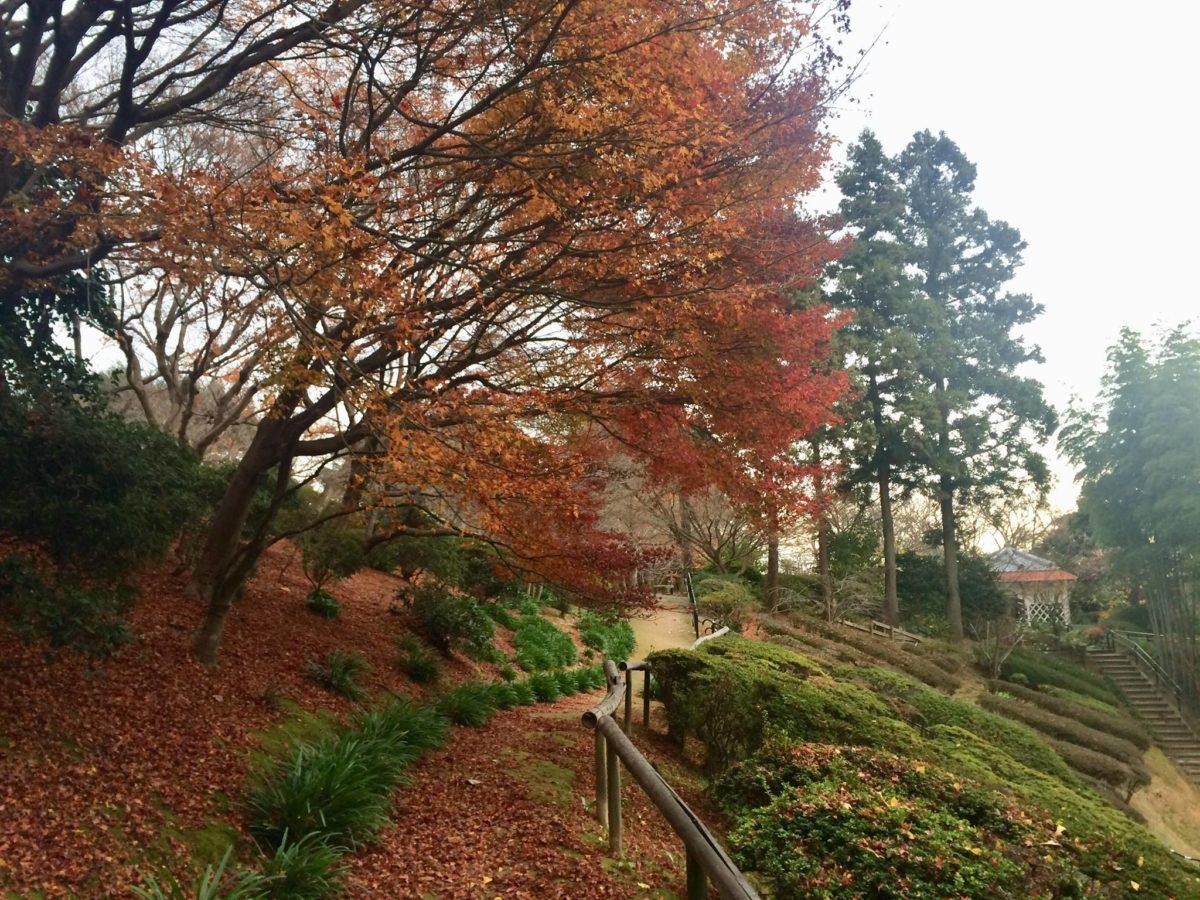 白野江植物公園植物02