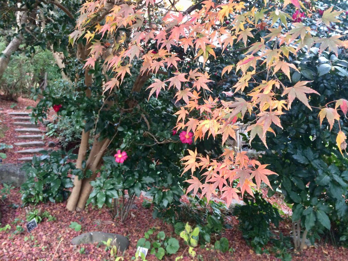 白野江植物公園植物04