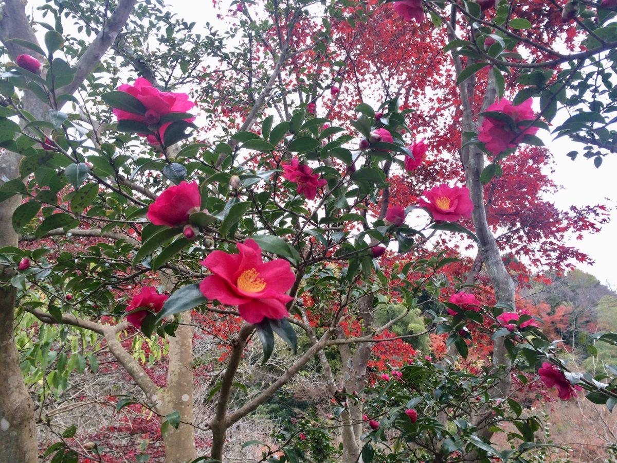 白野江植物公園植物05