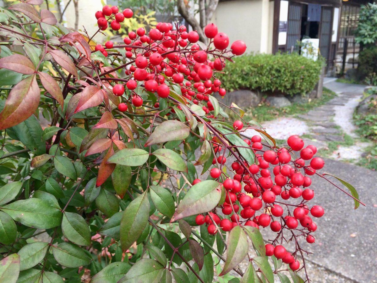 白野江植物公園植物07