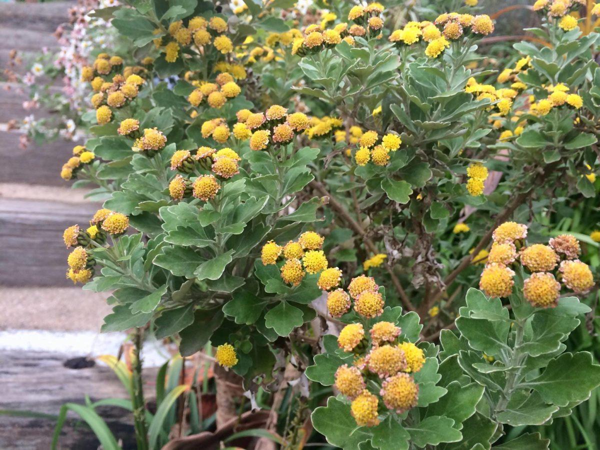 白野江植物公園植物08