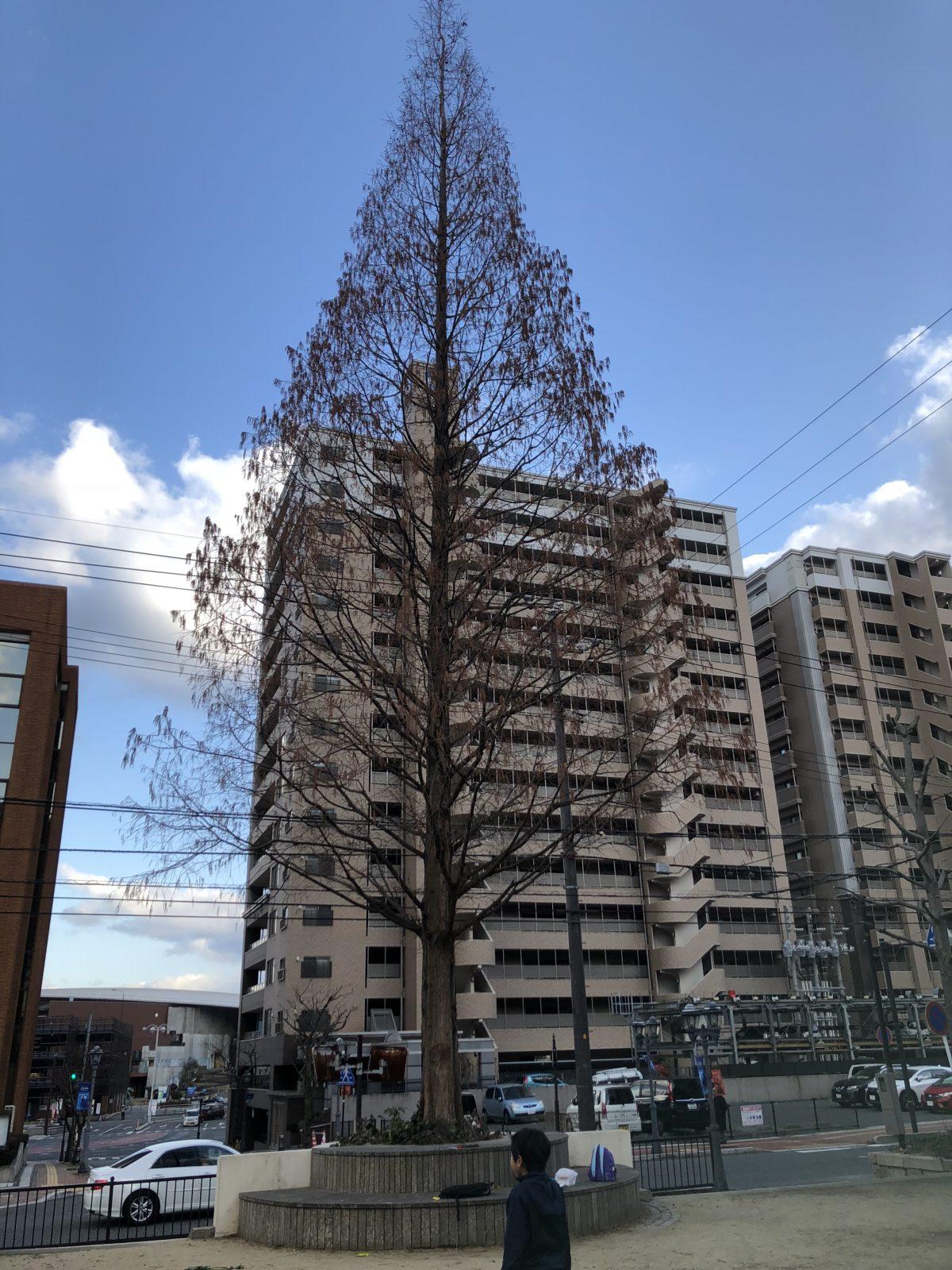 寿公園ポプラ