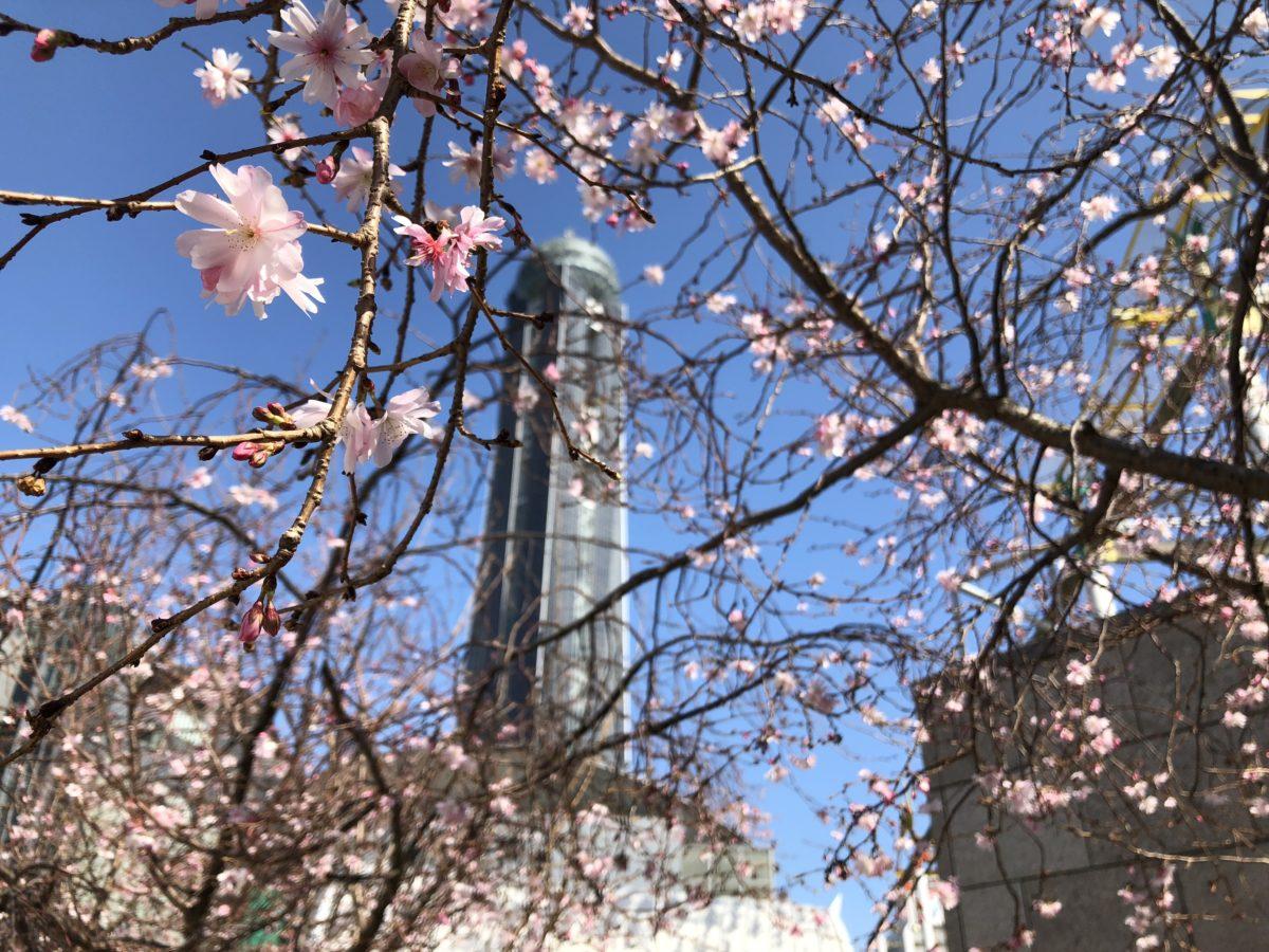 海峡ゆめタワーと桜