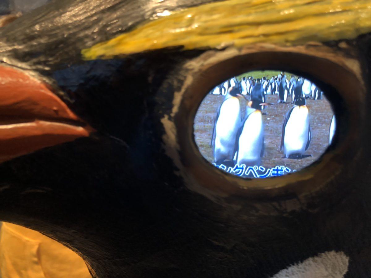 ペンギンの目
